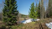 picture of siberia  - Sunny day in May - JPG