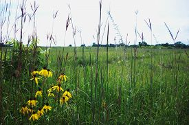 foto of wildflowers  - Prairie with green grass and wildflowers during summer time - JPG