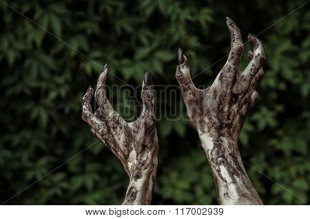 Horror And Halloween Theme: Terrible Zombie Hands Dirty With Black Nails Reaches For Green Leaves