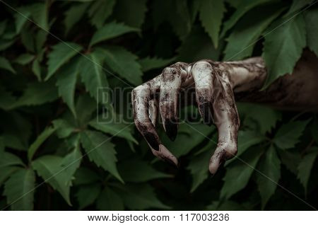 Horror And Halloween Theme: Terrible Dirty Hand With Black Fingernails Zombie Crawls Out Of Green