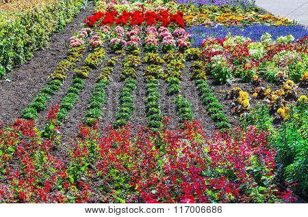 Colorful Colorful Flower Bed