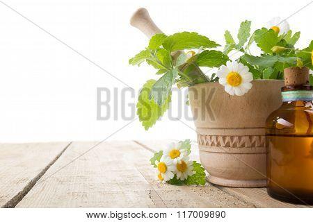 Fresh herb on wooden table. Alternative medicine concept.