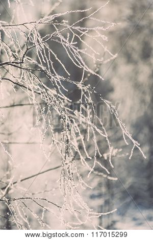 Branch In Hoar Frost On Cold Morning - Vintage Effect Toned