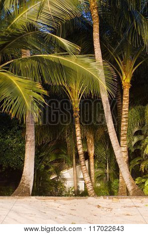 Tropical Beach And Palm Trees