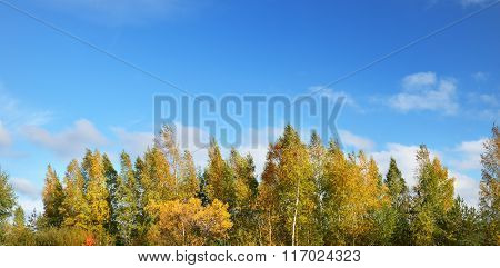 Autumn landscape. Brightly coloured trees against blue sky.