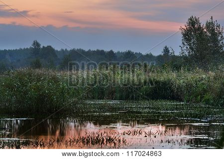 River landscape with long green grass at sunset