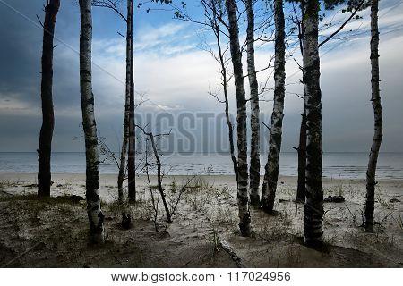 Baltic Sea Shore In Dramatic Light