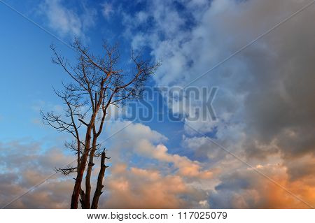 Lonely black tree without leaves against blue sky with clouds