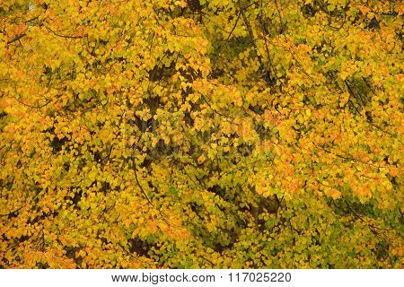 Yellow and Orange Autumn Leaves Texture