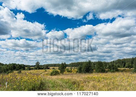 Meadow With Country Road And Yellow Wildflowers