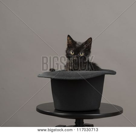 Black kitten pops out of hat over gray background with space for your text.