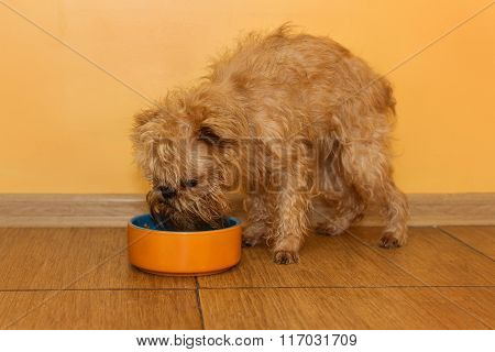 Dog  Eats From The Bowl