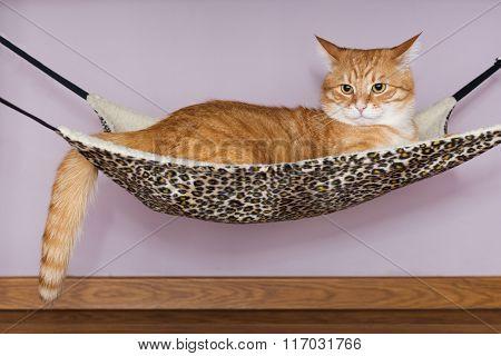 Big Red Cat Lying  In The Hammock