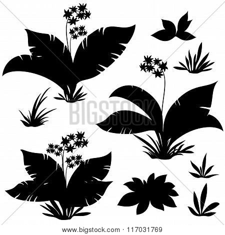Exotic Plants, Flowers and Grass