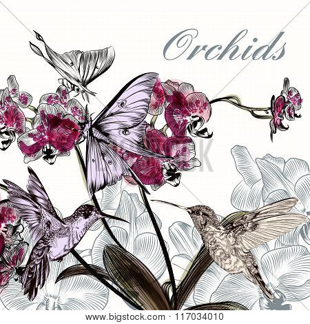 Beautiful Vector  Background With Orchid Flowers Hummingbirds