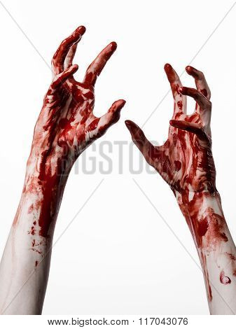 Bloody Halloween Theme: Bloody Hands Killer Zombie Isolated On White Background In Studio