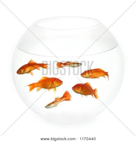 Fish In A Bowl