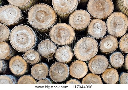 Stack of tree logs