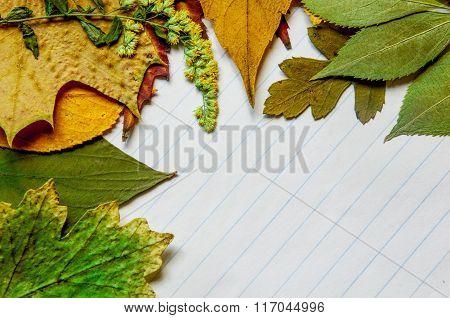 Herbarium On Notebook Sheet