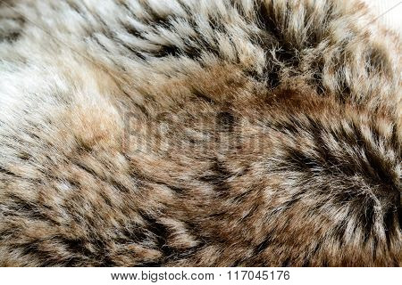 Fur Textured And Background