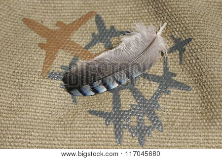 Feather A Mockingbird Jay Is On A Rough Fabric With A Painted Plane. Advantageous To Use The Service