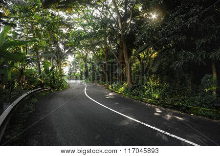 Asphalt curved road in the tropical forest