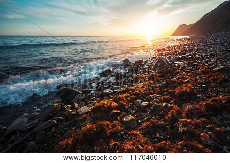 Sunset over the sea rocky coast with red sea weed