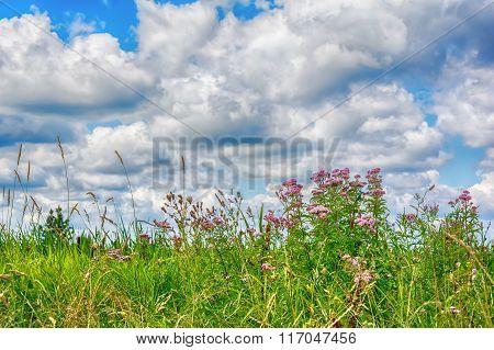 Wildflowers Sunny Meadow