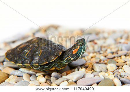 Sea Turtle On The Sand