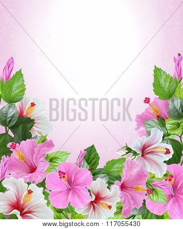 Flowers Of Hibiscus Pink And White. Tropical, Exotic. Floral Background. Invitation Card.