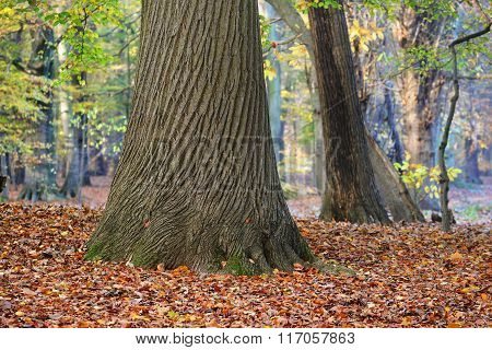 Oak tree trunk on grounds covered with autumn leaves
