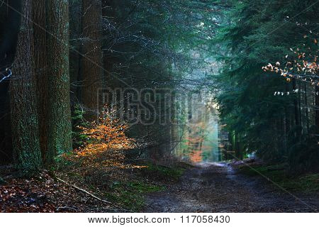 Mysterious forest alley with a small orange bush in foreground. Veluwe, the Netherlands