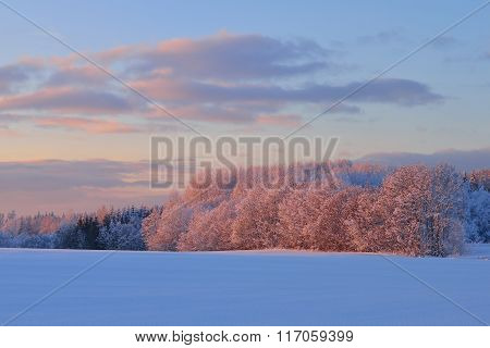 Snowcovered Trees And Bushes In A Winter Rural Landscape At Sunset