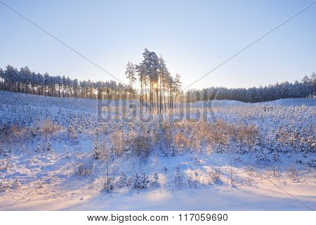 A Group Of Pine Trees At Sunrise During Hoar Frost And Snow