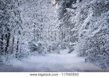 Rural Road Through A Winter Wonderland In A Deciduous Forest