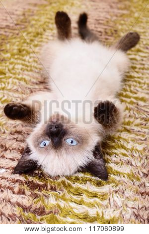 Kitten On Textile Background