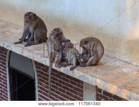 Monkeys At Khao Takiab Temple In Hua Hin Thailand