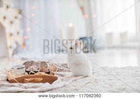 cute rabbit near tray of breakfast