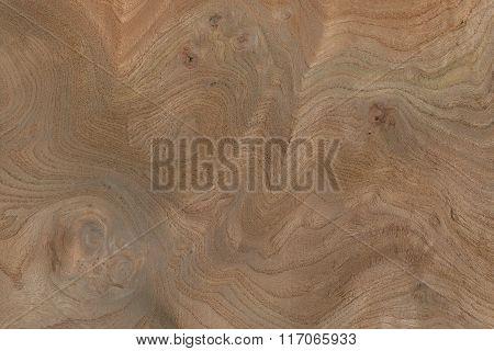 Carpathian Elm Burl (Ulmas procera) Europe
