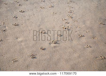 Bird footprints in sand