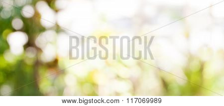Abstract nature bokeh background Golden heaven light Blurred background from nature with sun splash