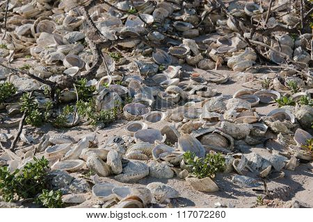 Shell midden on a beach in South Africa