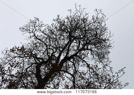 dry branches of black tree in the light sky