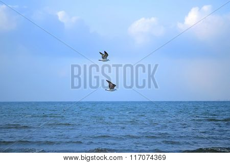 Two Gulls Flying In A Blue Sky