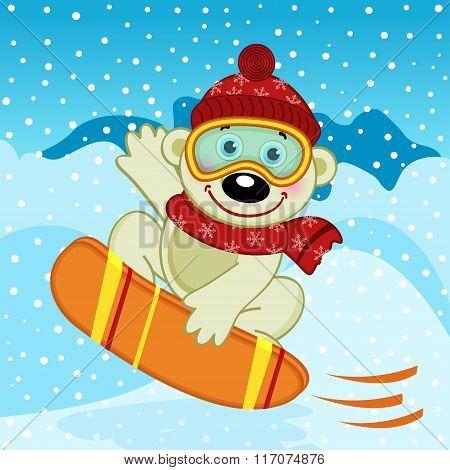 polar bear on snow board
