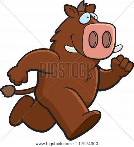 Boar Running