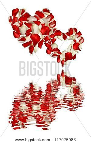 Two hearts with petals of roses on a white background with a reflection in the water.