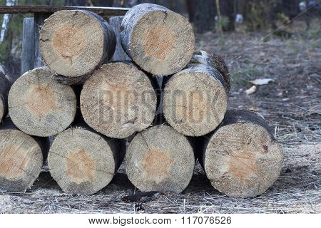 Stack Of Freshly Cut Firewood