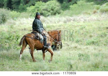 der Latin-Reiter