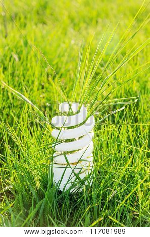 eco bulb in green grass